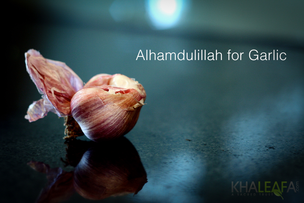 Alhamdulillah for Garlic