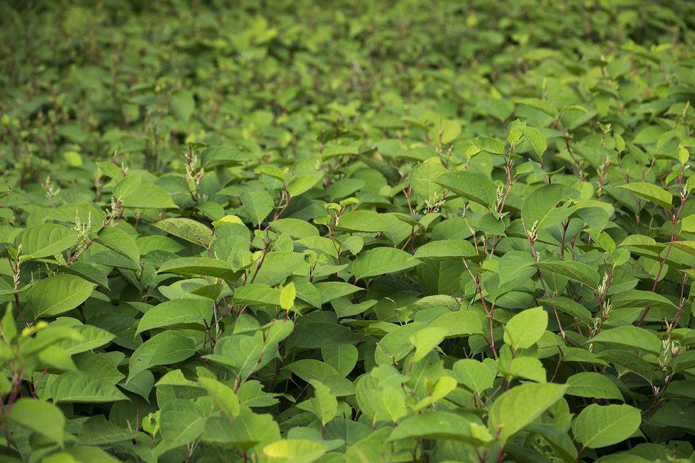 Leaves_DSC_0062.jpg