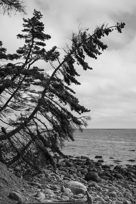 Tree3_DSC_0024.jpg