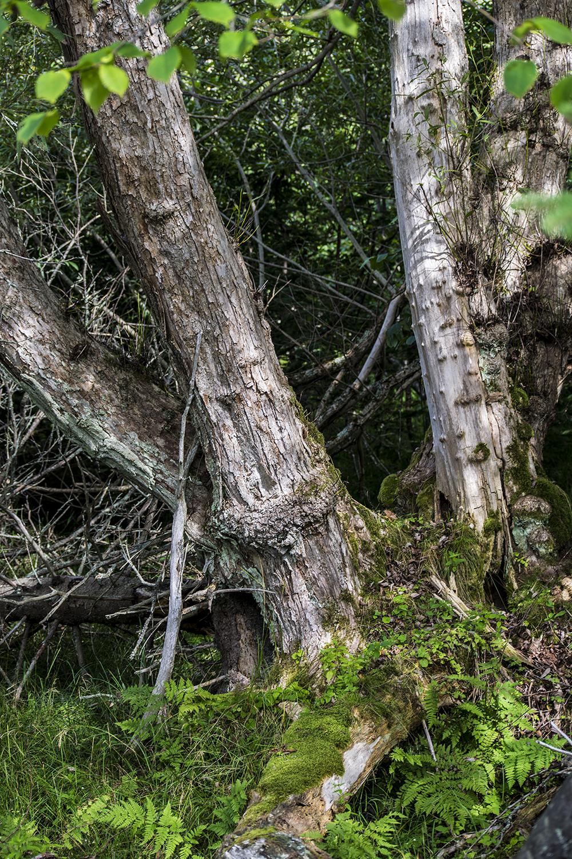 Tree2_DSC_0015.jpg