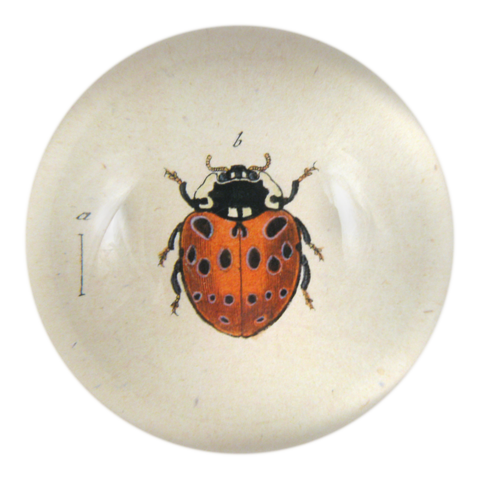 http://www.johnderian.com/collections/decoupage-browse-by-shape-paperweights-and-coasters/products/cdp_spotted-ladybug-png