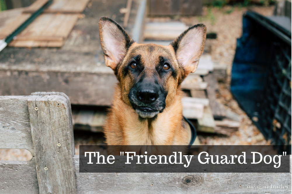 The _Friendly Guard Dog_ (1).png