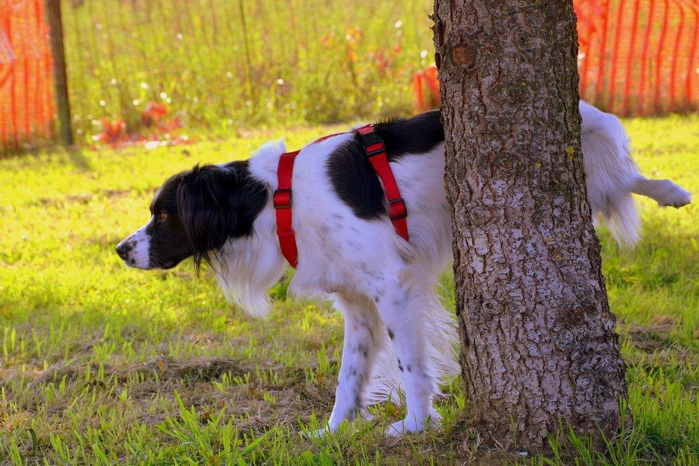 dog peeing on tree.jpg