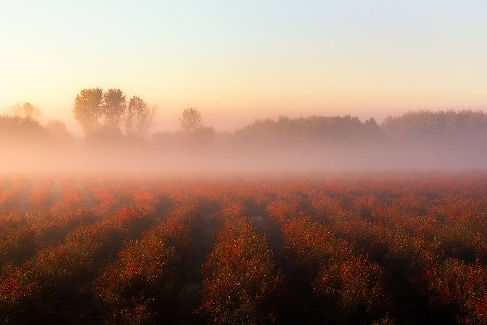 Red-Farm-Fog.jpg