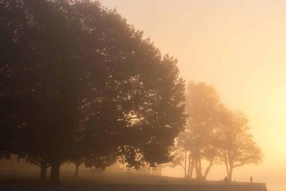 Stanley-Park-Fog-1.jpg