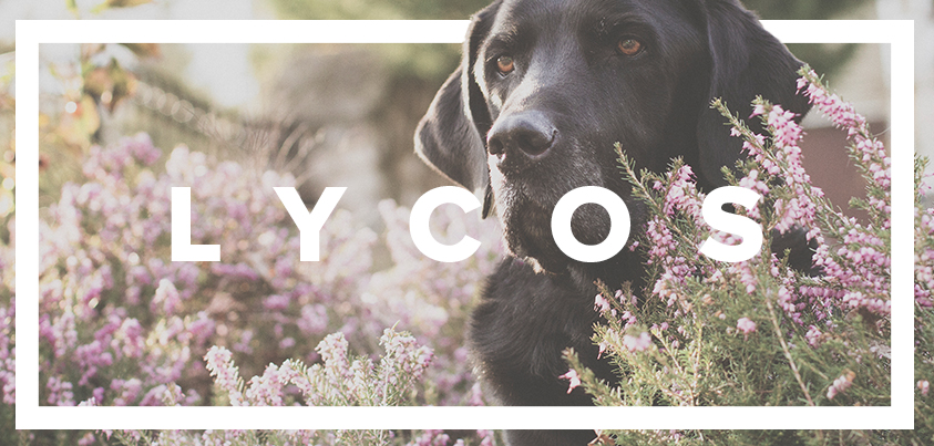 Rebranding announcement for Lycos.com. Over 90% increase in social media engagement.