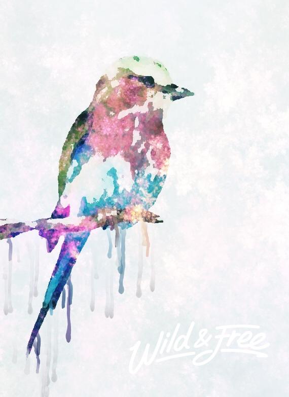Wild and Free.jpg