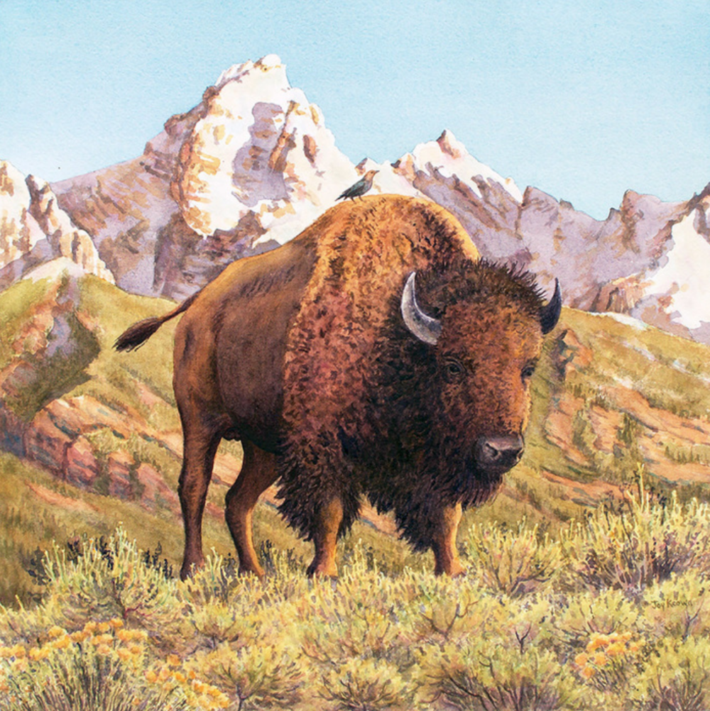 Joy Keown - Teton Tatanka