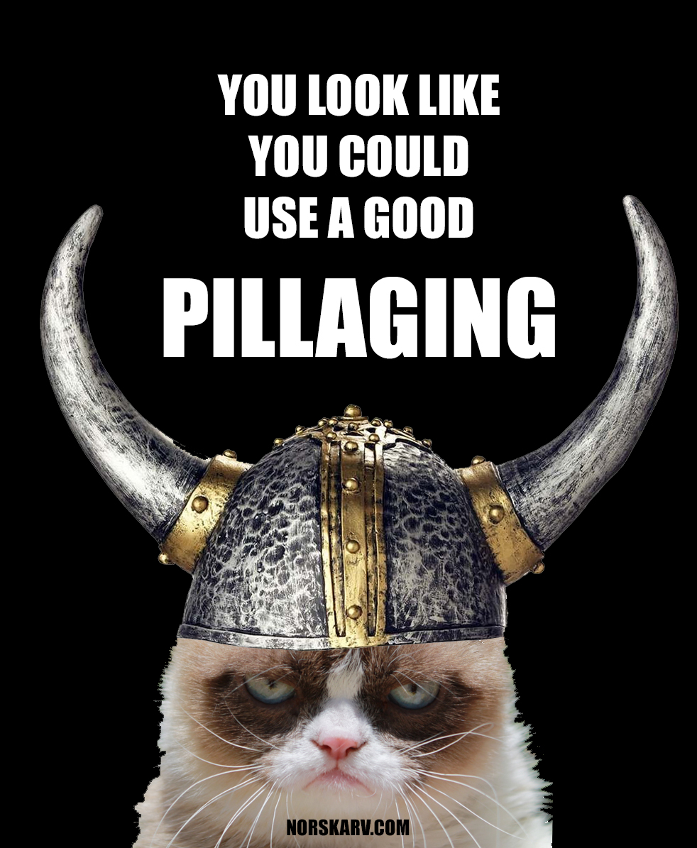 viking grumpy cat meme pillage pillaging norskarv alt for norge