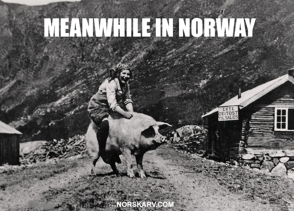 meanwhile in norway meme woman riding pig norwegian norskarv alt for norge