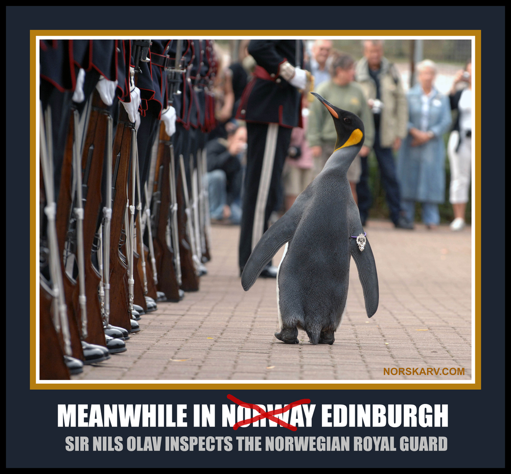 meanwhile in norway edinburgh meme sir nils olav inspects the Norwegian Royal Guard norskav alt for norge funny humor humorous penguin scotland