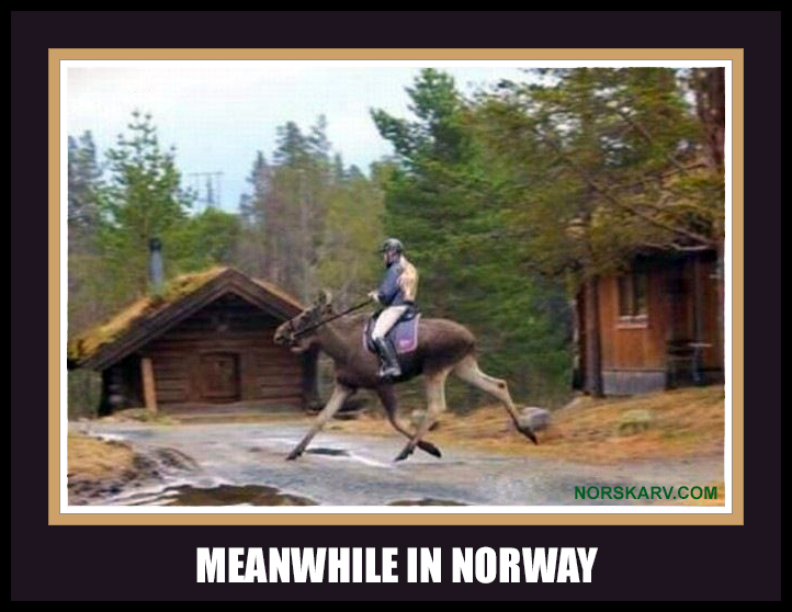 meanwhile in norway meme man on moose norwegian norskarv alt for norge funny humor humorous