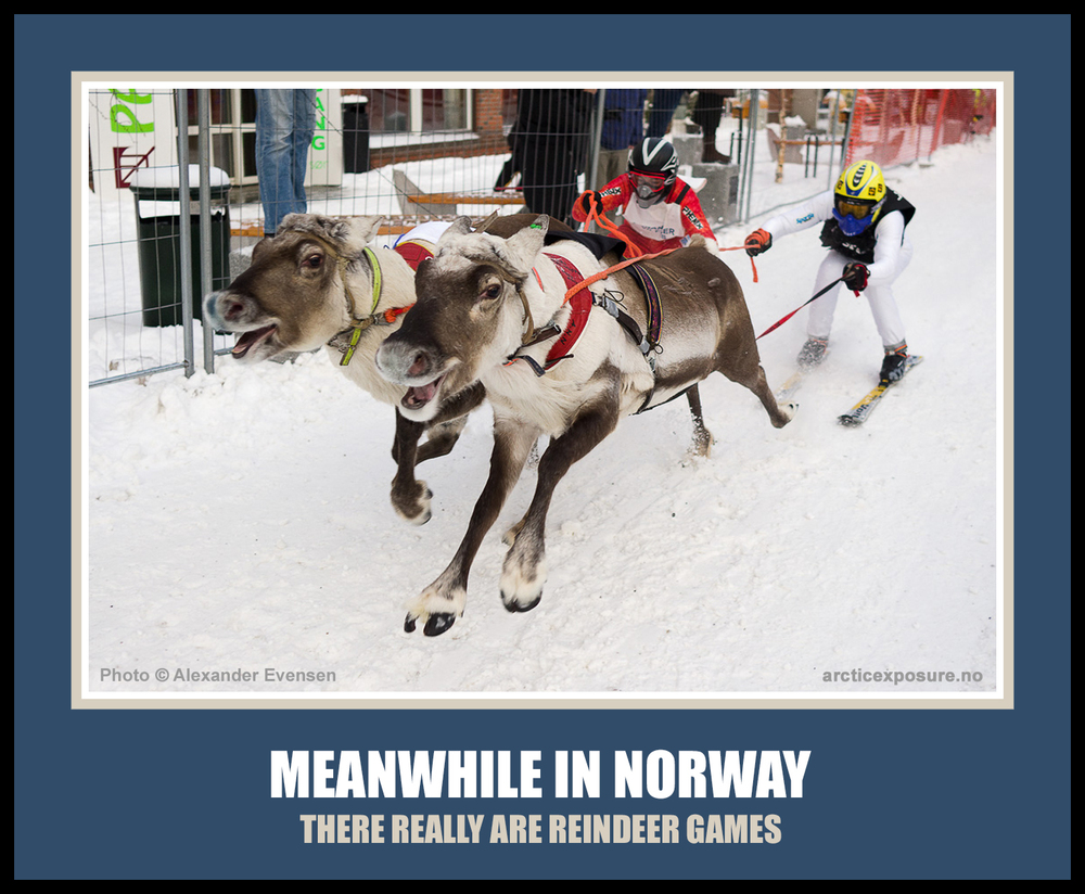 meanwhile in norway meme there really are reindeer games norskarv norwegian alt for norg funny humor ski skiing sami saami