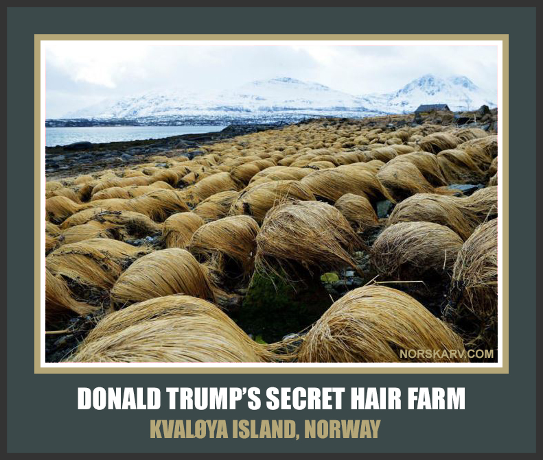 donald trump's secret hair farm Kvaløya island Norway meme norwegian norskarv alt for norge funny humor rug toupee