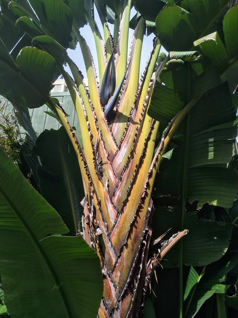 Amazing plant.JPG