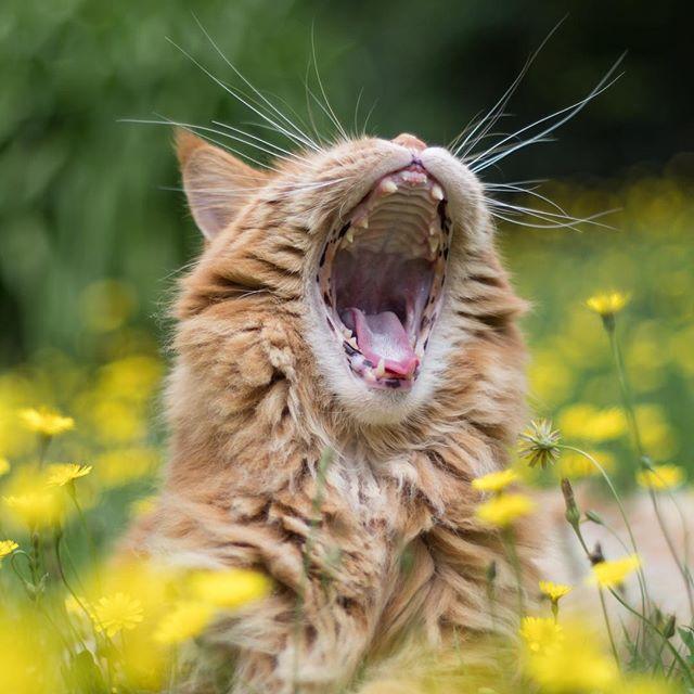 I am lion. Hear me roar!