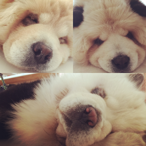 sleeping faces.. (clockwise from top left: DouDou, Yümi, tudou).