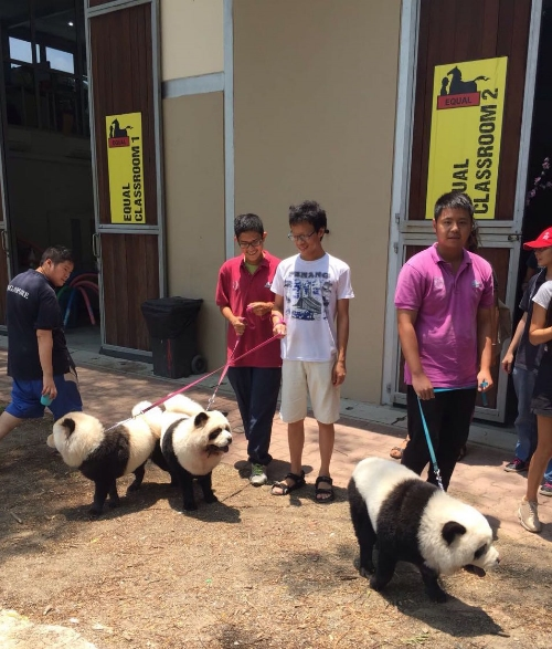 The children welcoming the Panda Chow Chows and leading them to the classroom.