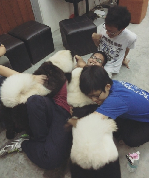 Lots of hugs and kisses for the Panda Chow Chows.