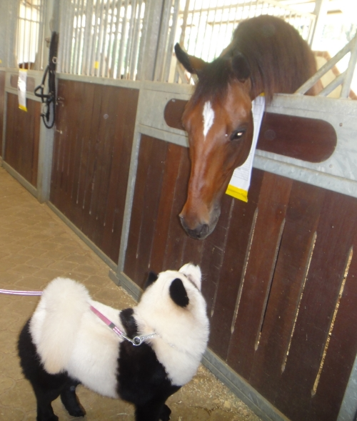 YüMi is completely inlove with horses, especially this handsome stallion called Astro.