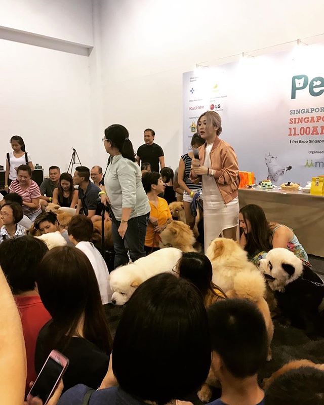 Who can spot the panda? 🐼 #tudou #petexpo #petexposg2017 #pandachowchows #findthepanda