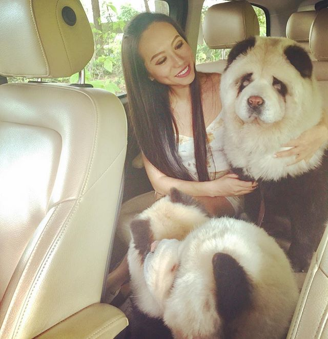 Our human is home from her London trip... which means: PARK TIME!!! #mommyshome #parktimefun #morningexcercise #outing #singapore #pandachowchows