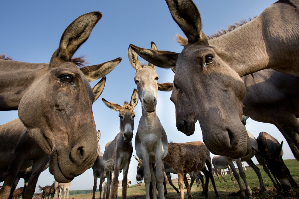 bakjac donkey.jpg