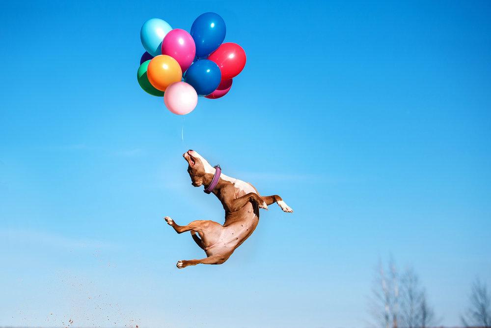 bakjac ballons.jpg