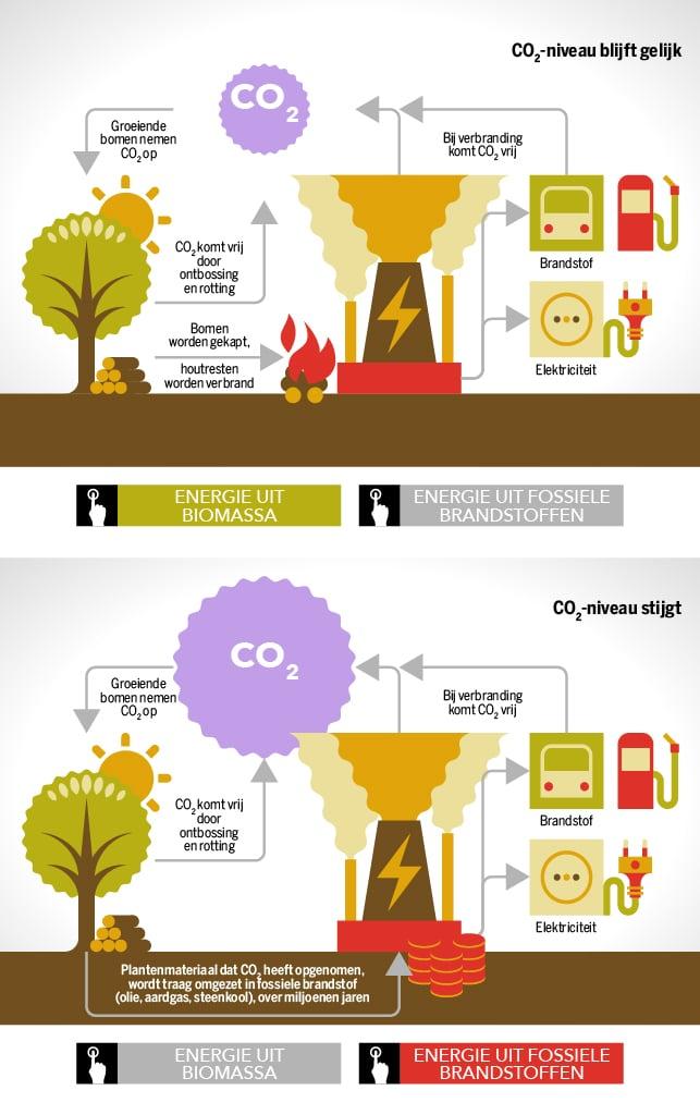 Energie_biomassa.jpg