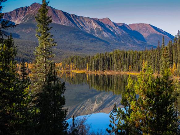 Wildlife Canada, Nahanni Range Road, Yukon