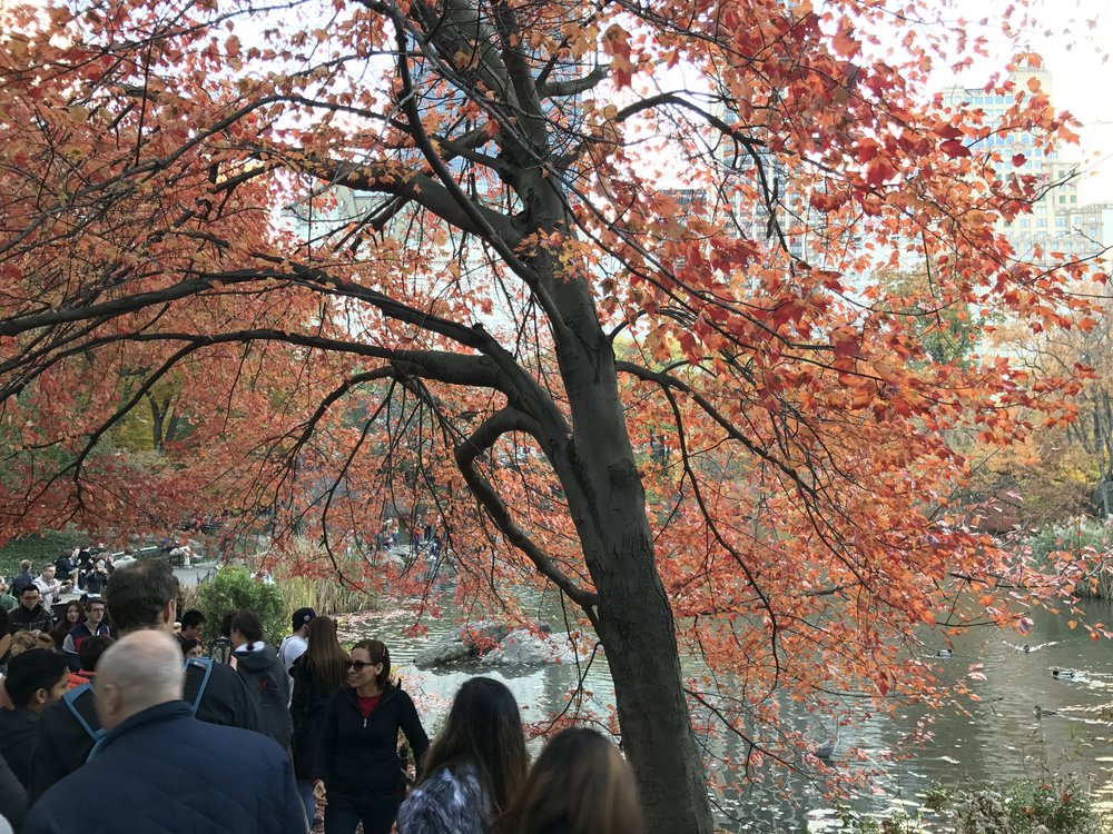 Fall was in full swing in NYC. Trees bursting in dark hues of red, orange, and green were a welcome sight to a girl unaccustomed to visible seasons.