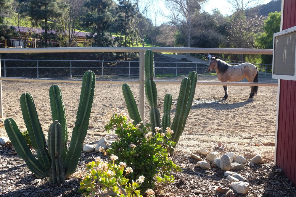 While walking along the park I stumbled upon a stable of horses. I love how diverse this park is, with its massive cacti growing just a few hundred meters from the cherry blossoms.