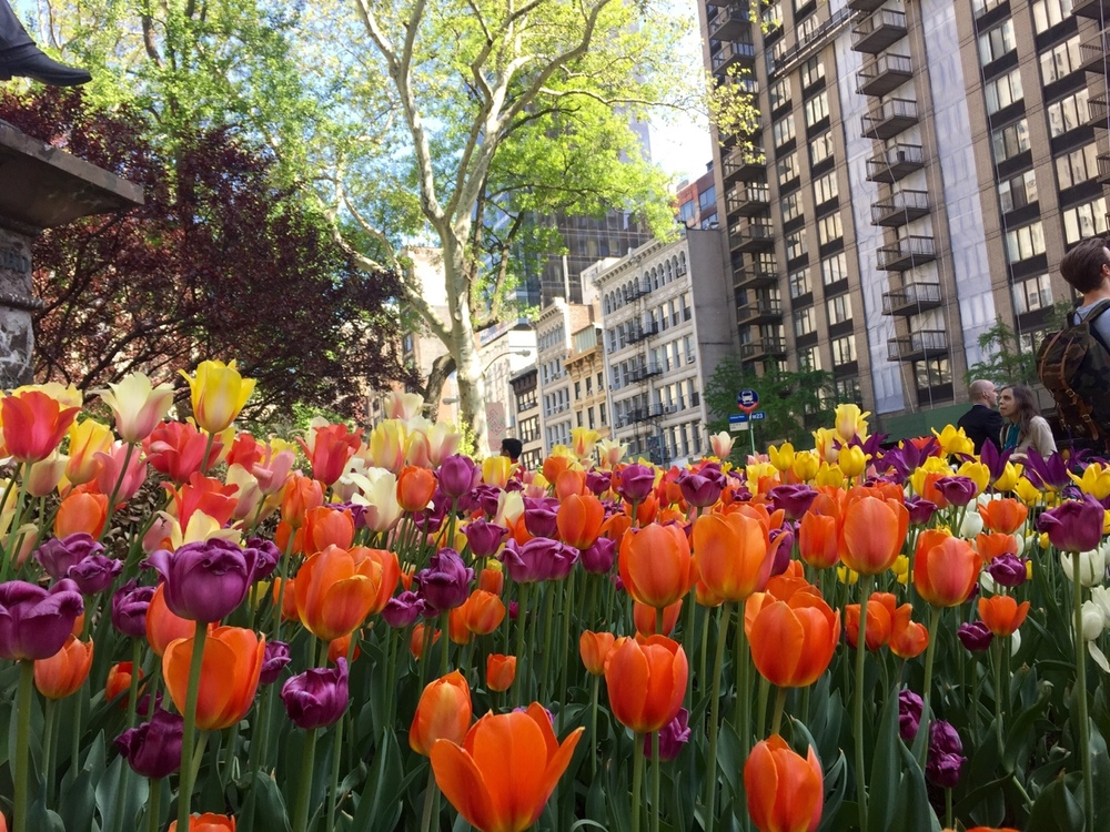 NYC in blossom