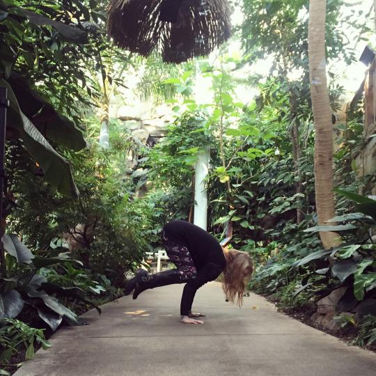 Phipps Botanical Gardens Yoga