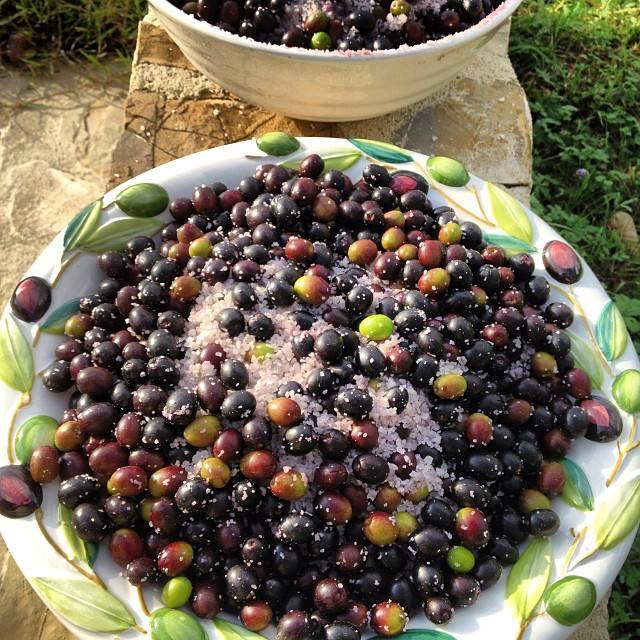 oliver i salt.jpg