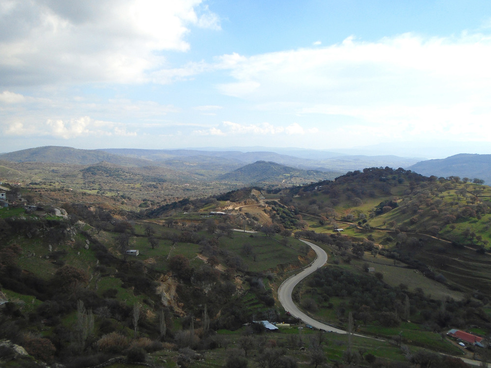 Olive groves on the slopes below Stypsi