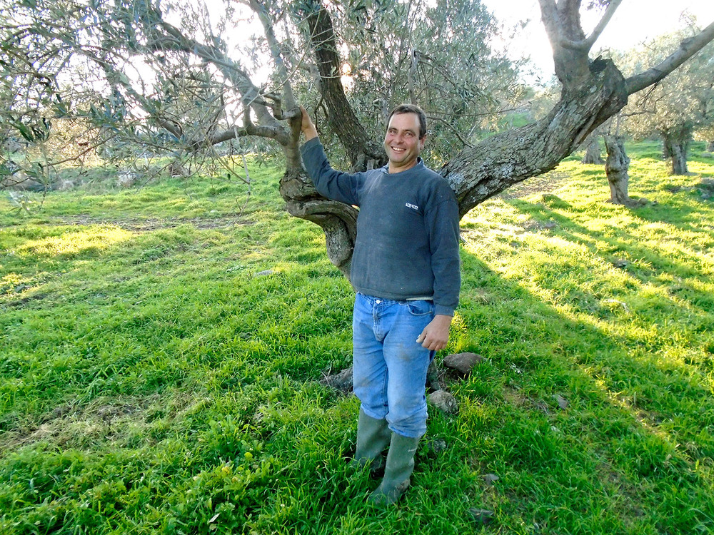 Giánnis Grosomanídis, a third generation olive grower