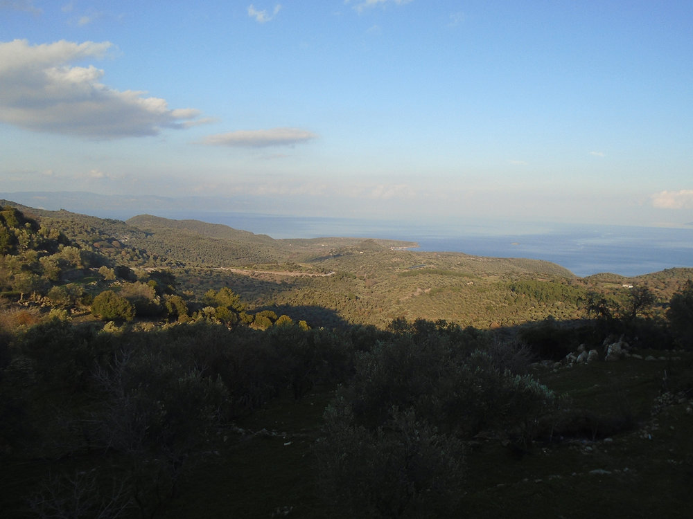 Olive groves around the village of Kleió