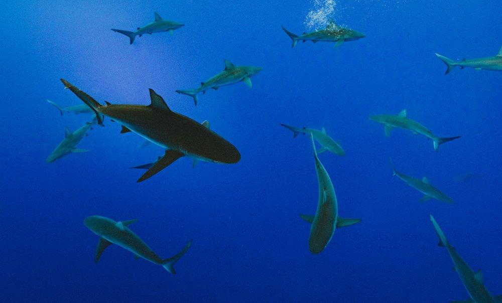 shark-story-encounter.jpg
