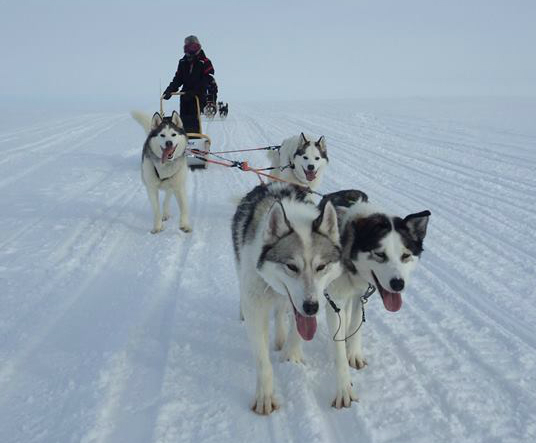 mushing 6_crop.jpg