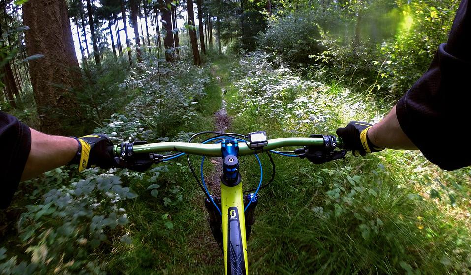 mtb forest_edit.jpg