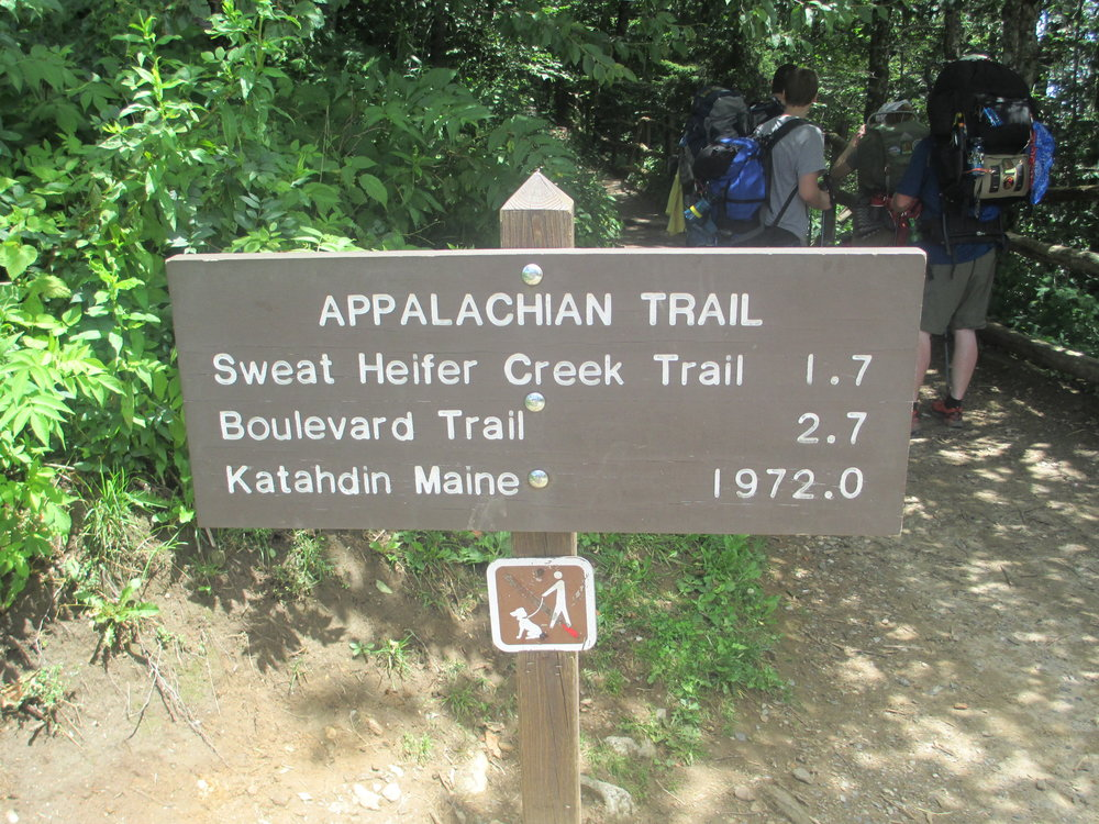 Appalachian_Trail_at_Newfound_Gap_IMG_5137.JPG