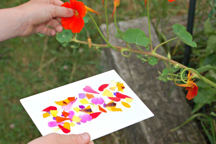 Make sticky nature cards