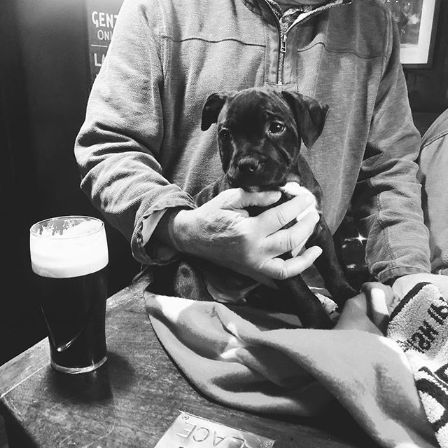 10 week old Wilf has been brought in for his first to meet everybody at the Volley today. He's already had his first Guinness ❤️ #puppy #lymeregis #pub #Guinness #localpub #dorset