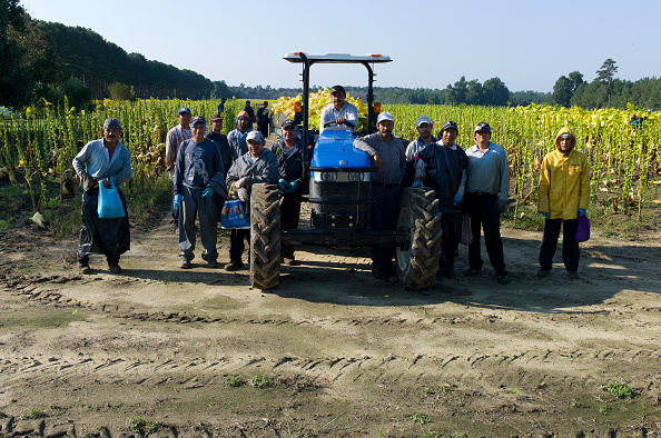 Migrant workers in Eastern North Carolina. Courtesy: Andrew Lichtenstein (Corbin News)