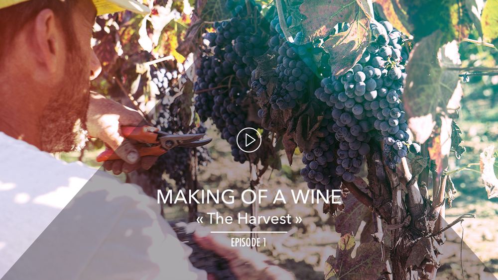 ZIOBAFFA organic-MAKING OF A WINE-A short Series-#STAYZIO