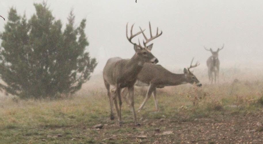 Age-Deer-2-914x500.jpg