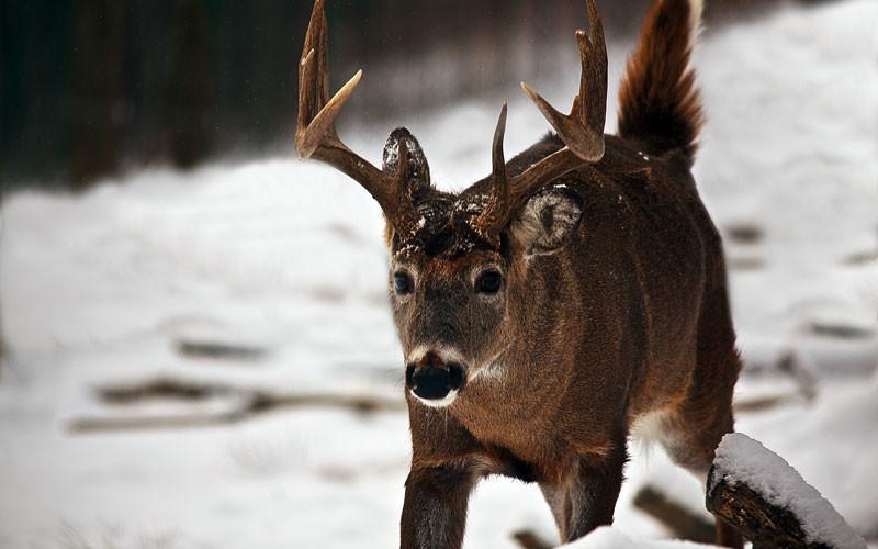 huntingduringrut2-800x500.jpg