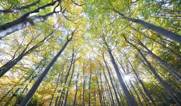treestand-600x350.jpg