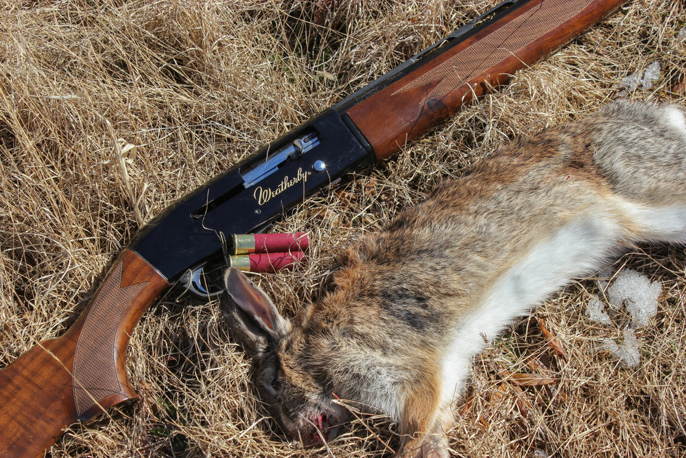 Rabbit Hunt (10).jpg